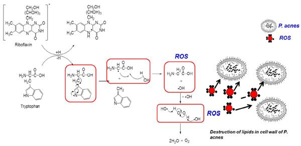 Reakcja fotodynamiczna i eliminowanie bakterii P. Acne